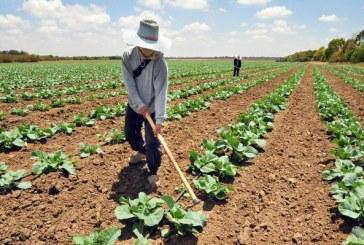 Ministrul Agriculturii: Subventiile la APIA vor fi platite la timp si in cuantum mai mare