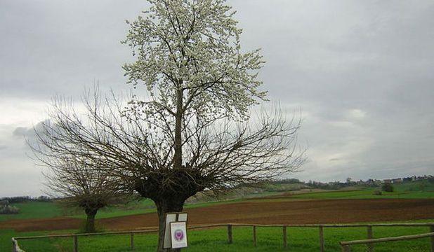 copac unic