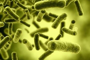 Bacteriile rezistente la antibiotice ar putea ucide 10 milioane de oameni pe an