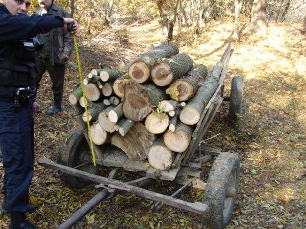 lemne furt