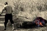 Reportaj in Maramures: Taiatul porcului, traditia de sute de ani, care refuza sa moara