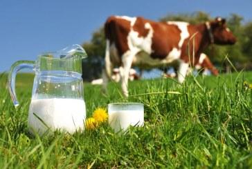 Alimentul viitorului. Este de patru ori mai bun decat laptele de vaca