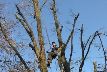 Marea toaletare! Romprest taie ilegal copacii din Baia Mare. Garda de Mediu, se aude?