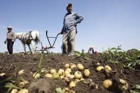Parlamentarii se intalnesc cu agricultorii si crescatorii de animale din Maramures