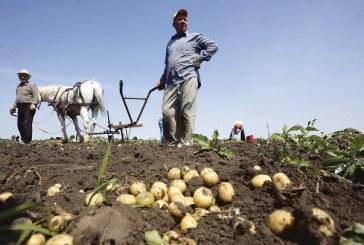 Formare profesionala gratuita, pentru agricultorii maramureseni (VIDEO)