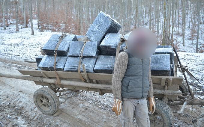 tigari de contrabanda (2)