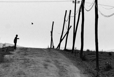 Cadrul zilei: Silviu Ghetie