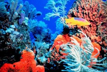 """Marea Bariera de Corali risca sa ajunga o """"groapa de gunoi"""""""
