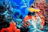 Vânturile puternice care însoţesc cicloanele creează condiţii extreme ce pot dăuna recifelor de corali