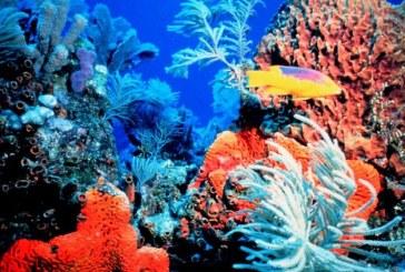 Coralii din Marea Mediterana, decimati de un val de caldura, au inceput sa renasca