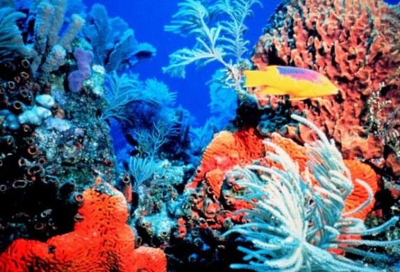 Coralii ameninațați cu dispariţia în insulele franceze din Oceanul Indian