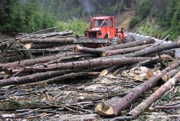 Maramuresul, printre judetele unde s-a taiat cel mai mult lemn intre 2002 si 2011