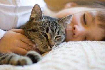 Torsul pisicii are efecte terapeutice