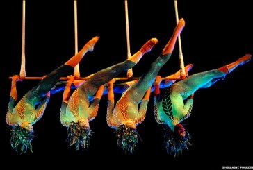 Mai multi acrobati au cazut de la inaltime intr-un circ din Florida