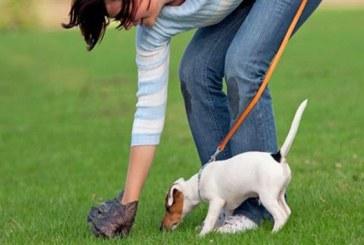 Reguli noi pentru detinatorii de caini din Baia Mare. Citeste-le aici