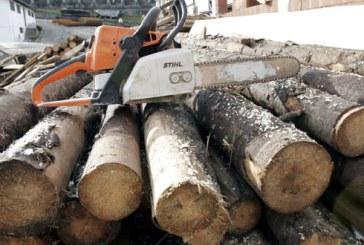 Dosar penal pentru un maramuresean care a taiat lemn ilegal