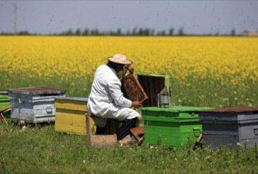 Apicultorii romani se confrunta cu depopulari si mortalitati de albine