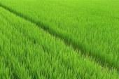 Vanzare terenuri in Carbunar – Extras publicatie imobiliara, din data de 07. 08. 2017