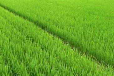 Vanzare teren arabil in Livezile, jud. Bistrita-Nasaud – Extras publicatie vanzare imobiliara, din data de 22. 12. 2016