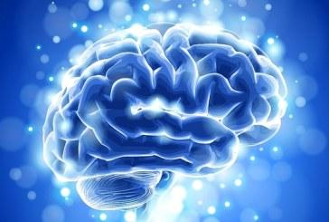 Creierul functioneaza ca internetul