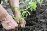 Kaufland invită în magazine micii fermieri care nu mai pot vinde în piețe