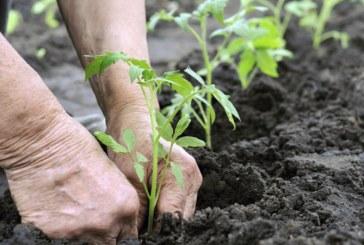 Până în 2030 un sfert din terenurile agricole să fie folosite pentru agricultura ecologică