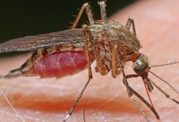 Ministerul Sanatatii a primit confirmarea cu virusul Zika in cazul unei tinere de 27 de ani