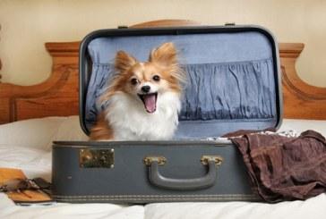 Aeroportul JFK din New York va fi primul din lume dotat cu un terminal doar pentru animale