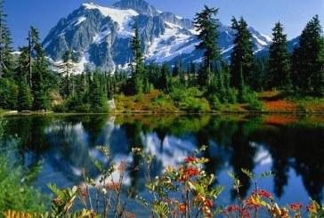 Natura poate fi vitala pentru sanatatea mintala a oamenilor