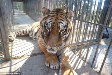 Criza din Grecia nu ocoleste nici animalele