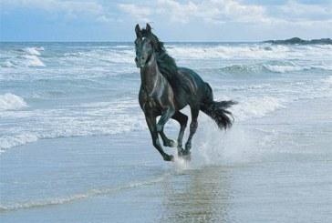 Caii si oamenii au expresii faciale foarte asemanatoare