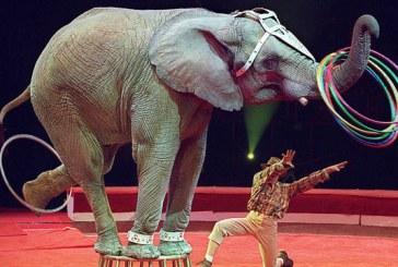Circul elvetian Knie va renunta la spectacolele cu elefanti
