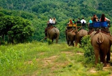 Thailanda: Un elefant si-a ucis insotitorul si a fugit in jungla cu trei turisti chinezi