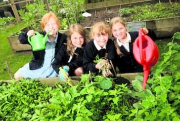 O mie de scoli din Franta vor avea gradini de legume ingrijite de elevi