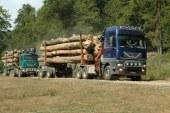 """Directia Silvica, drept la replica pentru """"Padurarii din Maramures au furat anul trecut lemn de peste un milion de lei"""""""