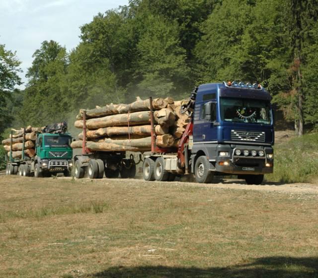 masina lemn padure