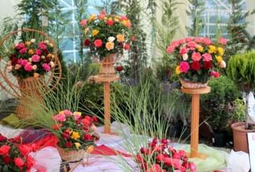 Sarbatoarea Castanelor: Ce poti sa vezi la Expo-Flora (FOTO)