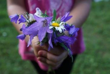 Editorial: De ce oferim flori in prima zi de scoala?
