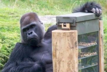 Gradina Zoologica din Berlin a instalat automate pentru maimutele doritoare de snacksuri