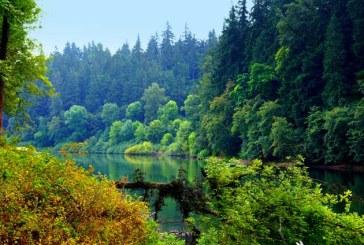 Pe Terra cresc trei mii de miliarde de copaci, insa rata taierilor creste in ritm alarmant
