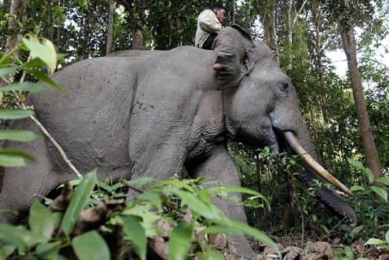 Uciderea elefantului Yongki provoaca un val de indignare in Indonezia