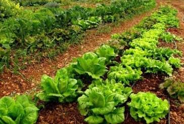 Constantin: Suprafetele cultivate in sistem ecologic din 2010 pana in prezent au crescut cu 37%