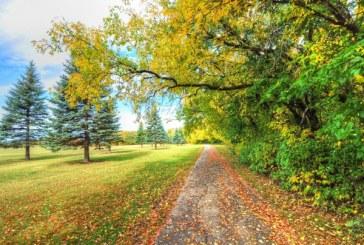 Densitatea copacilor de la marginea strazilor influenteaza sanatatea fizica si psihica