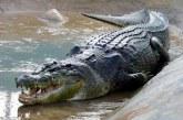 Un bărbat din Tanzania, grav rănit după ce s-a luptat două ore cu un crocodil
