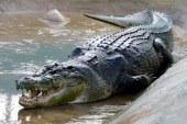 Un fermier australian care a omorat un crocodil de 100 de ani, amendat cu 10.000 de dolari