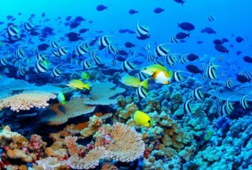 Lotiunile impotriva razelor solare contribuie la degradarea Marii Bariere de corali