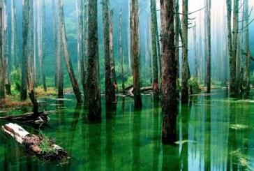 Jumatate din speciile de copaci din padurea amazoniana sunt amenintate de despadurire