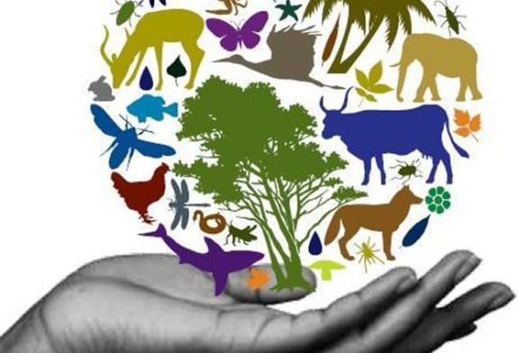 Habitat si biodiversitate: Campanie de promovare destinata elevilor maramureseni (VIDEO)