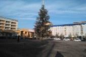 Primaria Baia Mare a renuntat la concertul de Anul Nou. Doi brazi de Craciun, in acest an