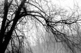 VREME NEBUNĂ – Frig și ninsori de aprilie în Maramureș